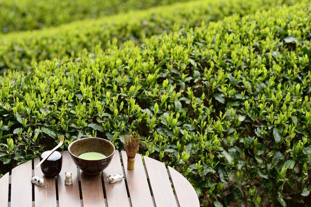 чайная плантация Япония